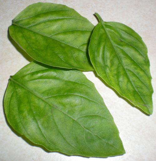 basil-leaves.jpg